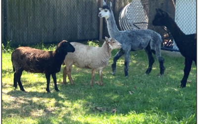 New Arrivals at the ARPS Farm